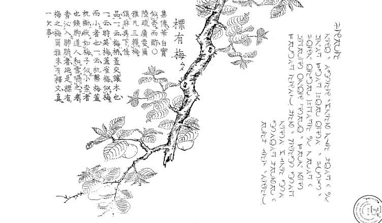 meihua-sannong
